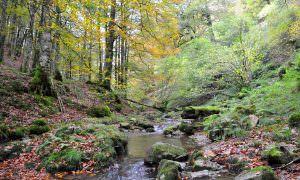 Navarra – La selva de Irati
