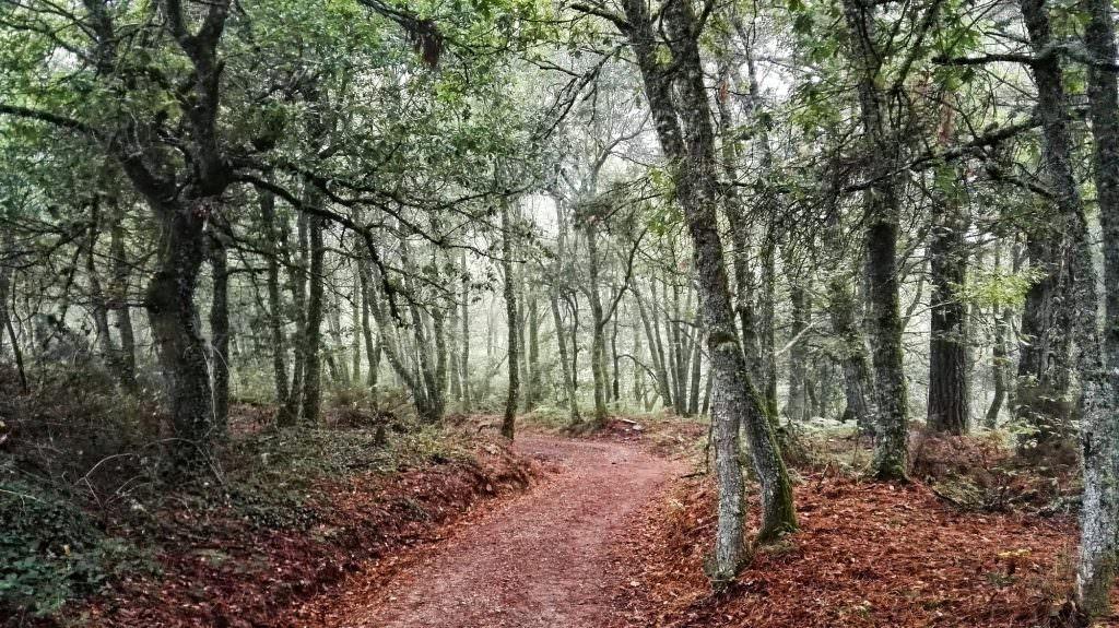 Triacastela - Sarria