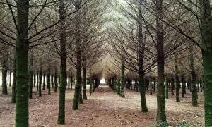 Camino de Santiago. Etapa 15: Ribadiso da Baixo – O Pedrouzo