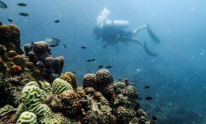 Tailandia – Ko Tao y el submarinismo