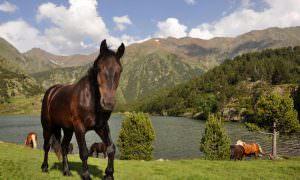 Pirineos franceses – Cerdanya francesa