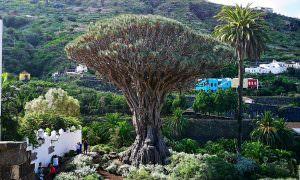Tenerife – La Orotava, San Juan de La Rambla e Icod de los Vinos